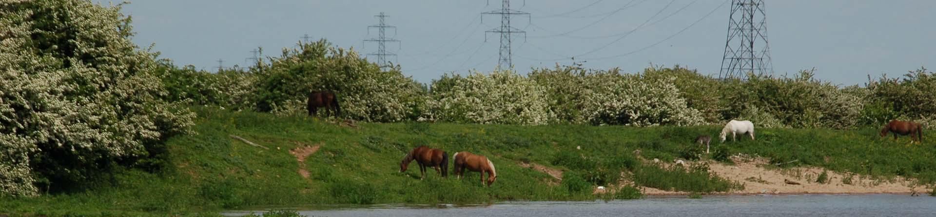 energie-en-rivierwater-header